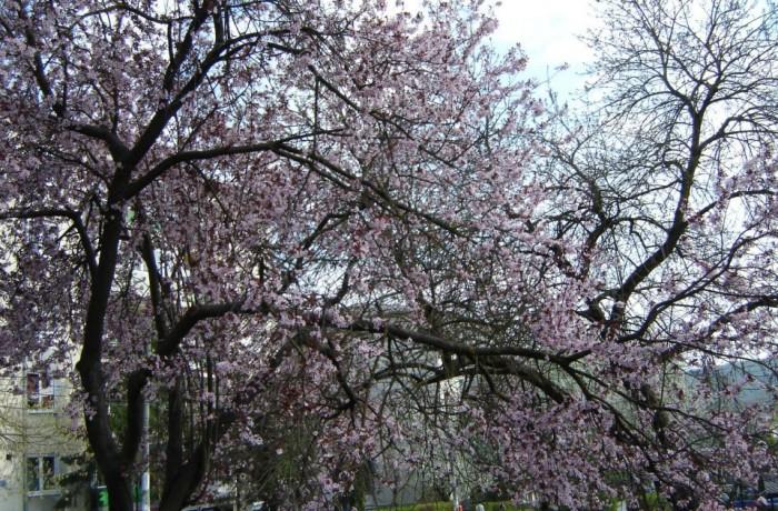 Legenda celui mai cunoscut cartier din Dej: Dealul Florilor