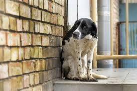 Start pentru o nouă campanie de sterilizare gratuită a câinilor, la Dej