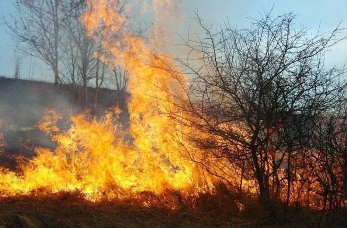 Arderea miriştilor şi resturilor vegetale, interzisă!