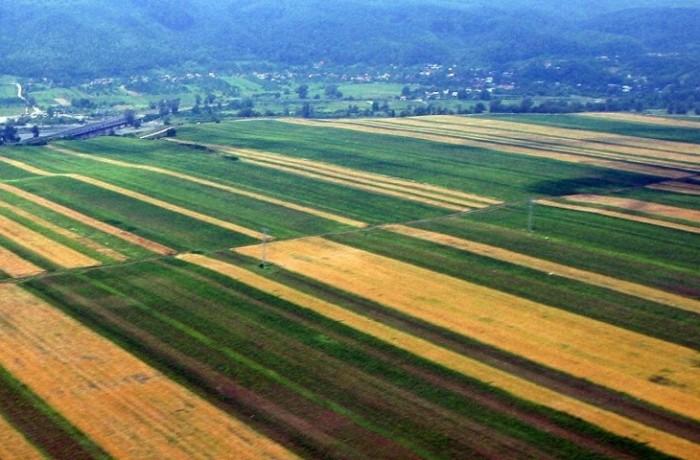 Cornel Itu cere stoparea vînzării de terenuri agricole către străini