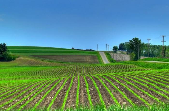 Măsuri financiare temporare pentru susținerea agricultorilor