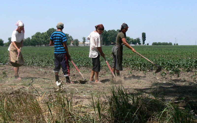 Guvernul vrea să introducă tichete de muncă pentru zilieri