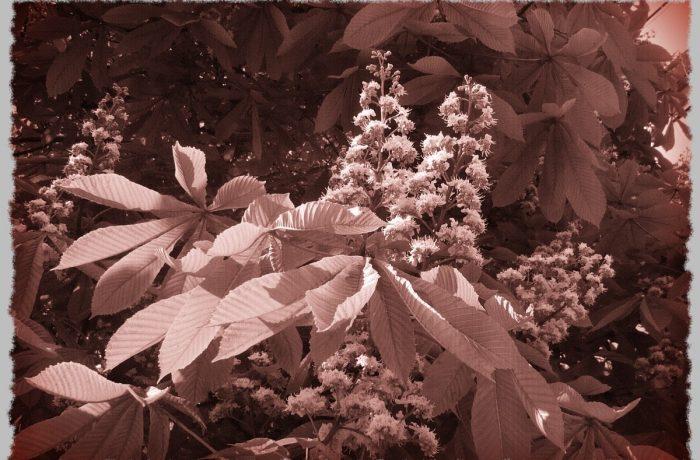 Lemnul Verde: Povești la umbra bătrânului castan (2)