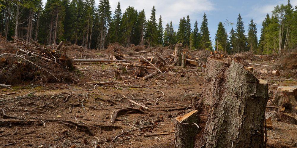 Bilanţul marilor tăieri de păduri: 573.000 metri cubi  într-un an