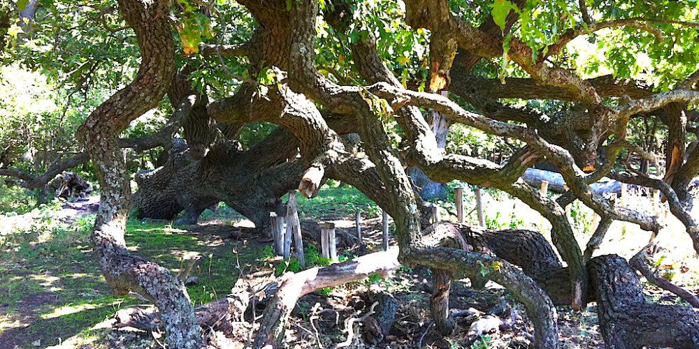 De văzut: Pădurea Letea, o minunăție în Delta Dunării