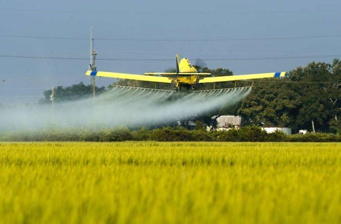 Producătorii de fructe și legume folosesc pesticidele după ureche…