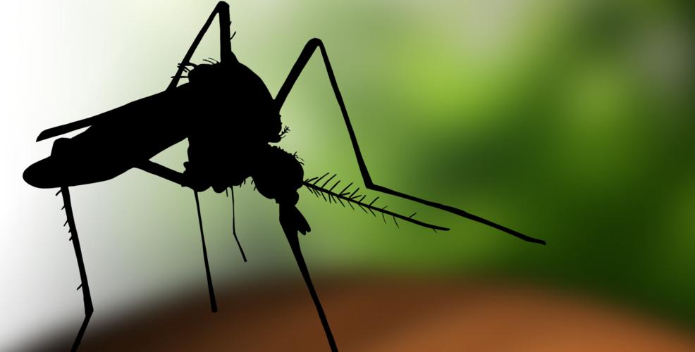 Ministerul Sănătății: infecția cu virus West Nile nu se transmite de la om la om, ci doar prin înțepătură de țânțar!