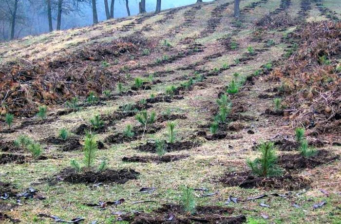 În județul Cluj va fi împădurită o suprafață de 169 de hectare