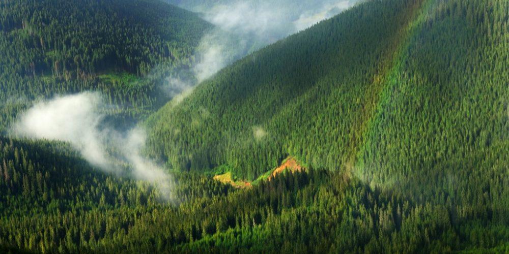 Românul nu e frate cu codrul. Statul  e pe cale să piardă 20% din păduri