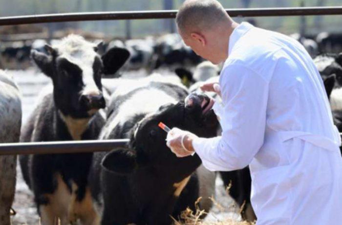 """Cornel Itu: """"Rolul fiecărui medic, inclusiv al celor veterinari, este important pentru România!"""""""
