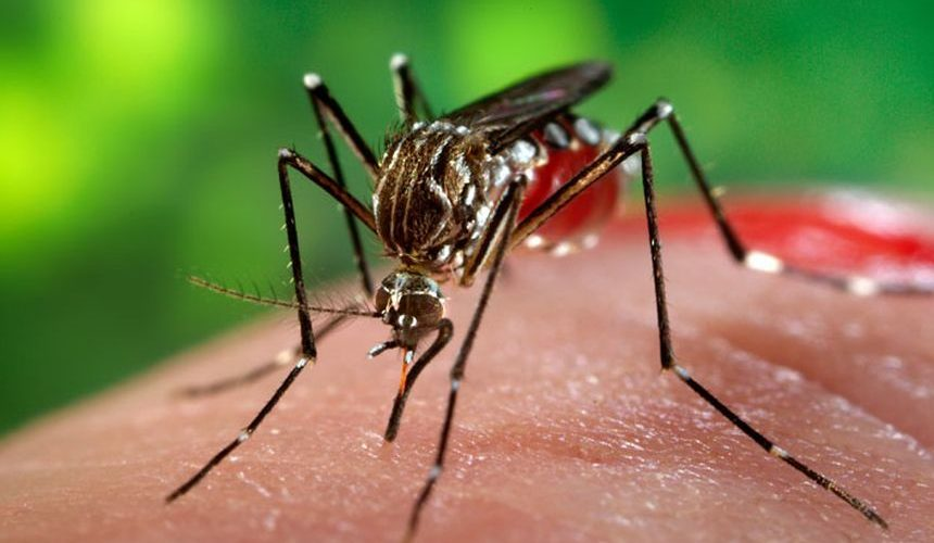 INS a anunțat 19 cazuri de infecție cu virusul West Nile