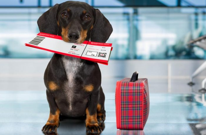 Aeroportul Internațional din Cluj a fost autorizat pentru introducerea animalelor de companie în România