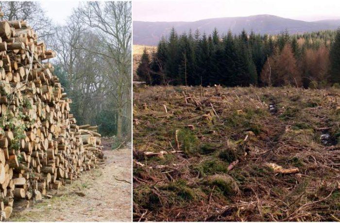 Comisia Europeană a activat procedura de infringement pentru României din cauza tăierilor ilegale de păduri