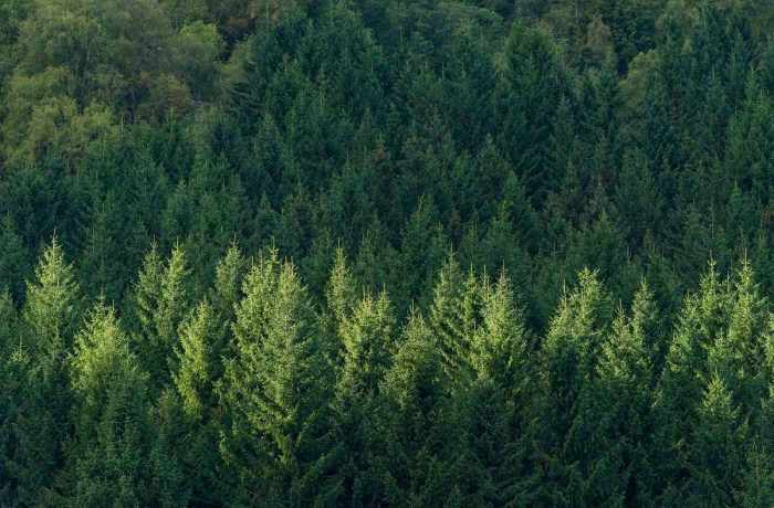"""După Marea Defrișare, """"Românii plantează: o pădure cât o țară""""!"""