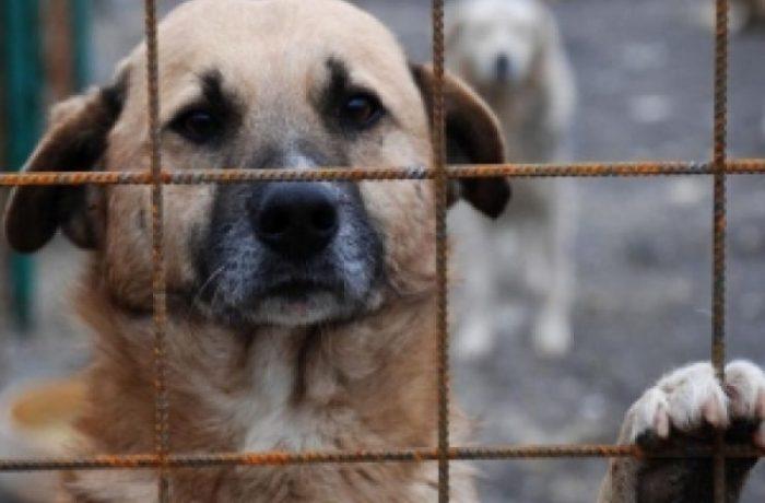 Se înființează Poliția Animalelor. Autoritățile pot interveni fără mandat dacă un animal este torturat