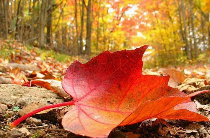 Meteorolgii au anunţat cum va fi vremea în ultimele două săptămâni de noiembrie