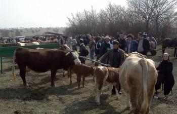 Primăria Dej realizează lucrări la târgul de animale