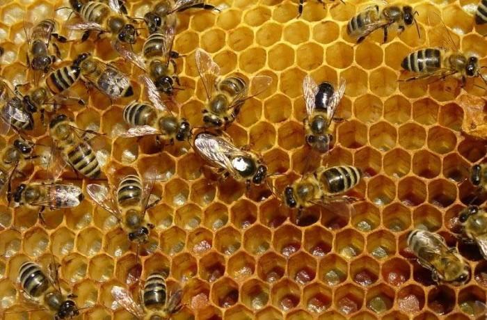 Veşti bune pentru apicultori!