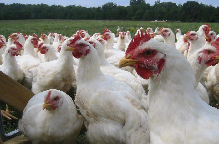 Focare de gripă aviară în şase judeţe din țară