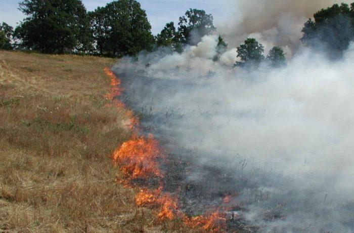 APIA: este interzisă arderea miriștilor și a resturilor vegetale