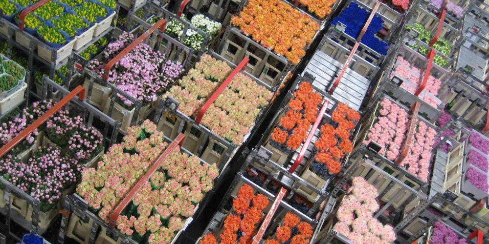 Suntem campioni, la importul de flori!