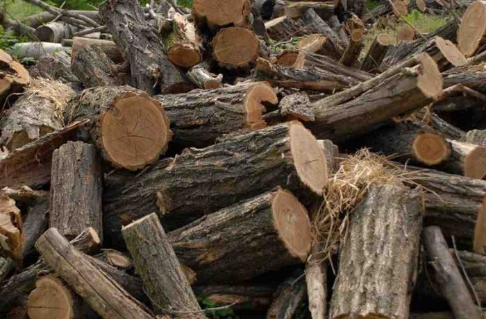 Soluții pentru suplimentarea lemnelor de foc necesare populației