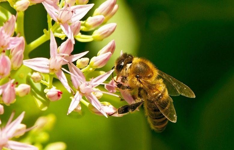 Apicultorii români cer  protejarea albinelor împotriva pesticidelor