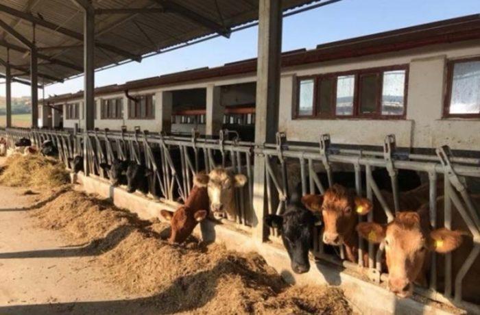 Cinci fermieri din județul Cluj s-au reunit în Frăția Bacilor Ardeleni