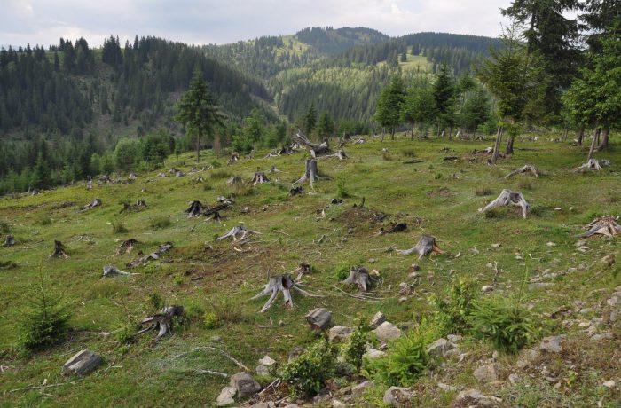 ONG-urile de mediu, plângere la CE împotriva României pentru distrugerea pădurilor seculare