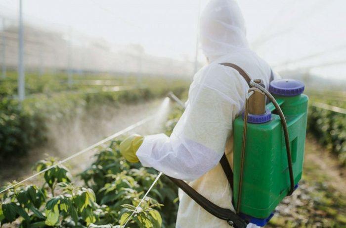 Roșii, cu și fără pesticide!