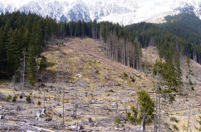 """Ministrul mediului vrea """"să scăpăm de tăierile ilegale"""""""